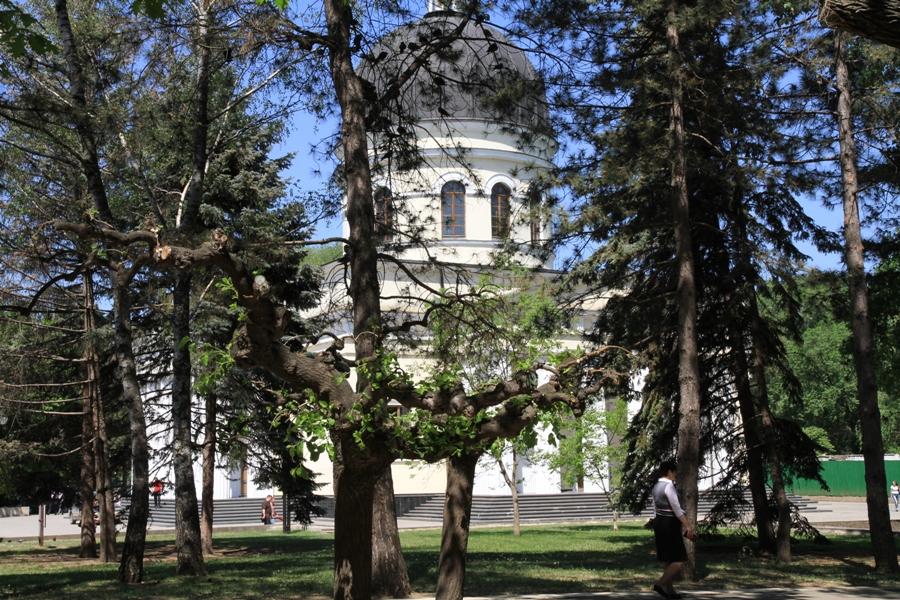 Vedere spre Catedrală printre copacii parcului
