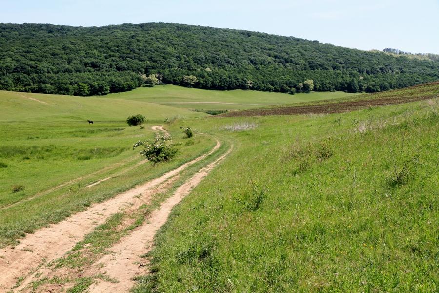 По дороге в направлении села Редиул де Сус